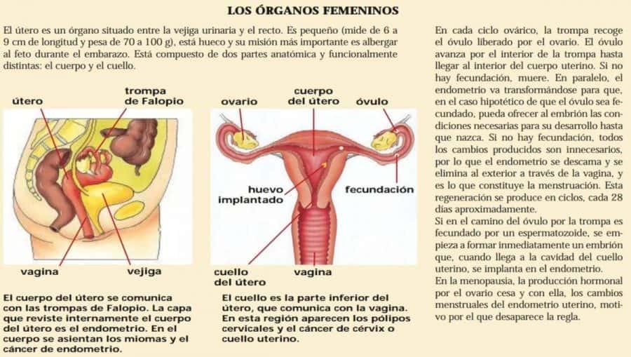 Histerectomía: consecuencias que debes conocer